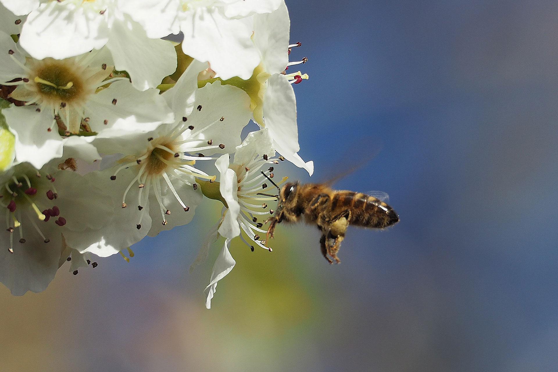 Pollination at Play
